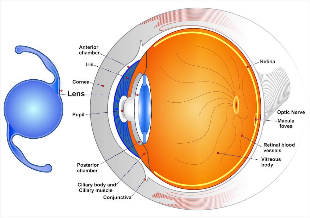 Diagram of how advanced technology lenses work